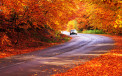 <p>Fall Driving Tips</p>