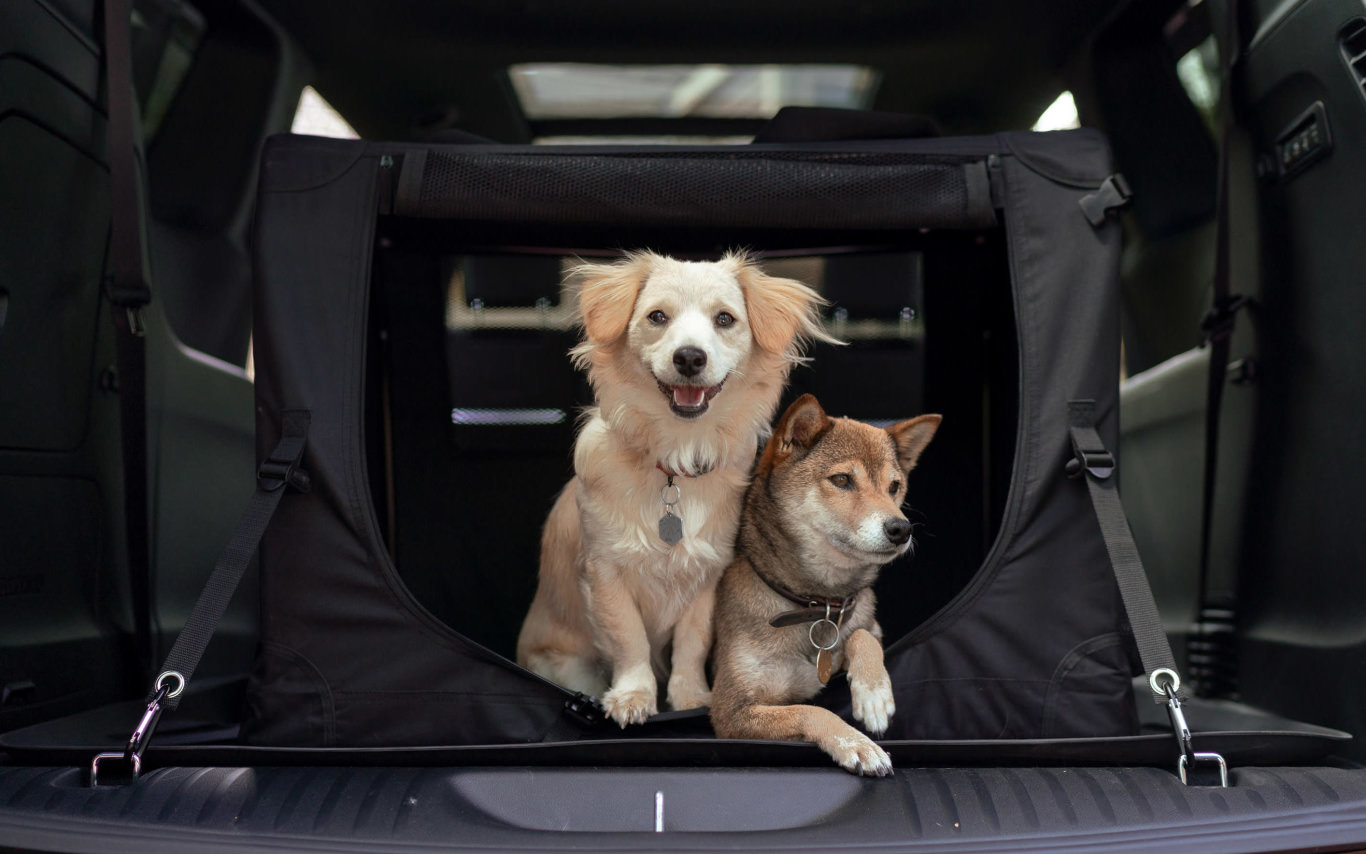 What's the best car to carry a dog? Take a pick from these 10