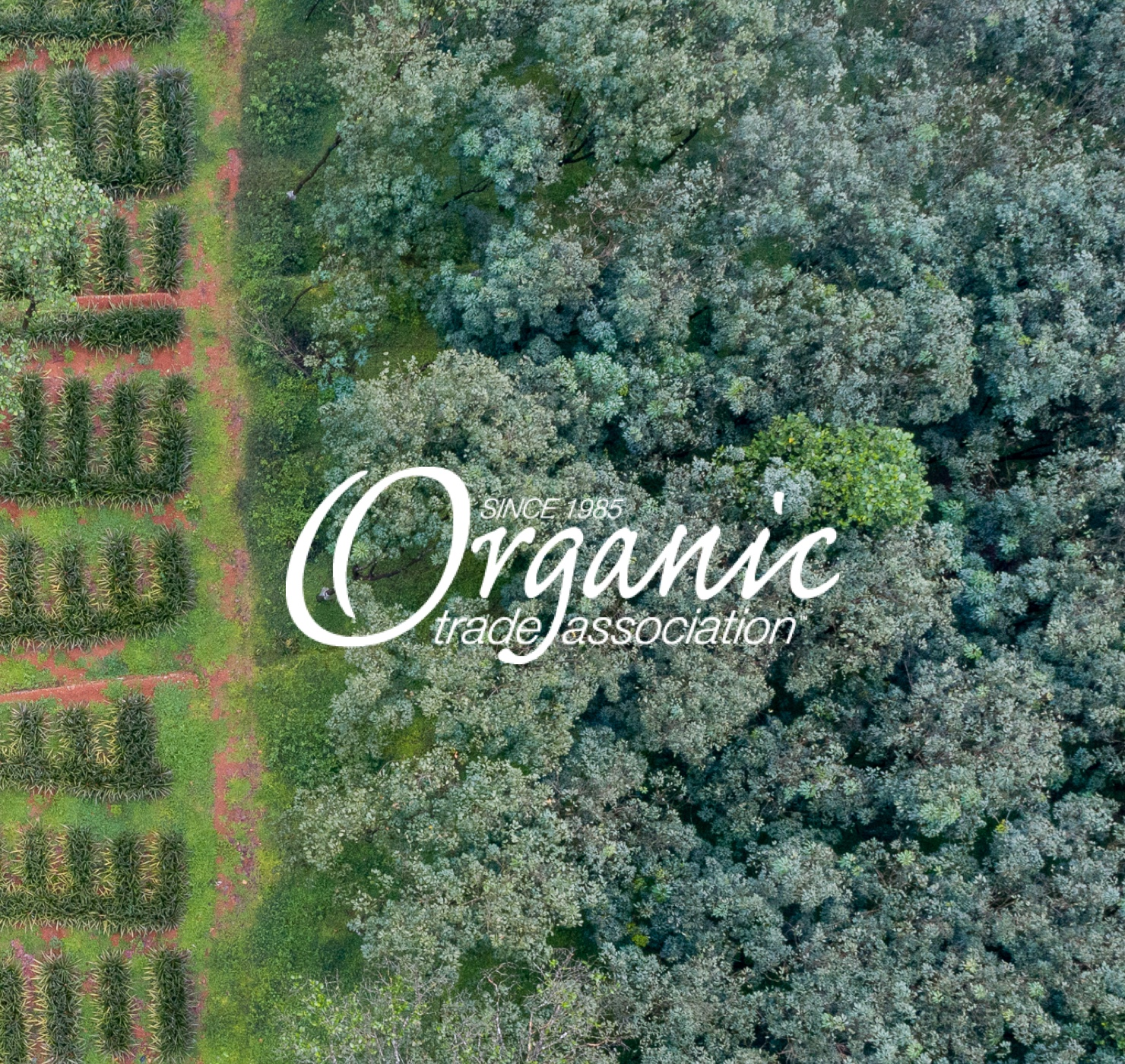 Organic Trade Association Avocado Green Mattress