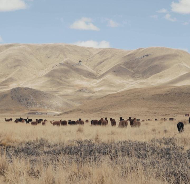 Natural Alpaca Wool