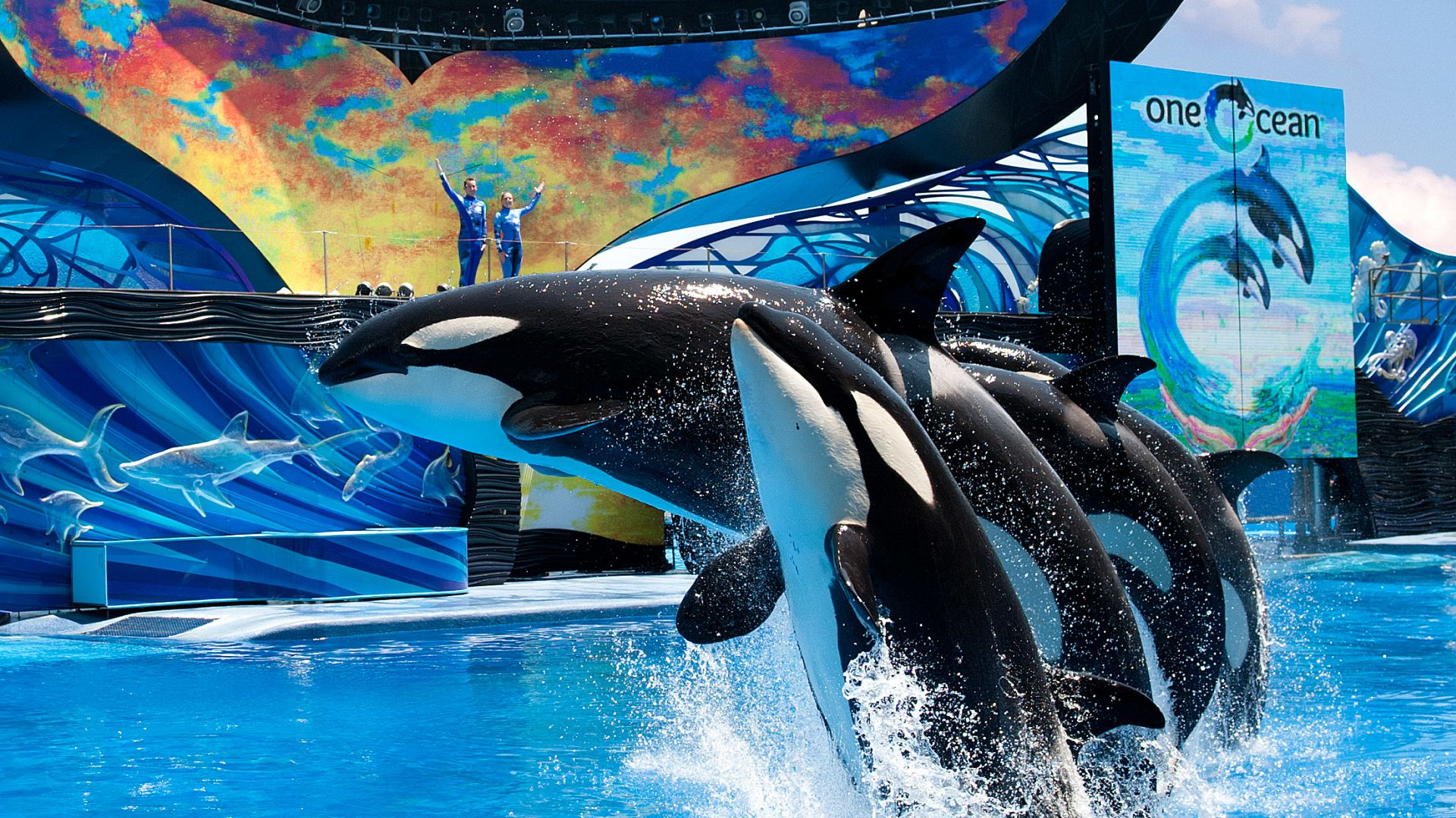 ᐅ Seaworld Orlando - Video: Hinter den Kulissen ...