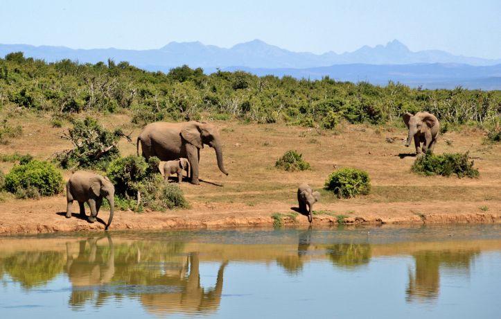 Elefanten an der Tränke