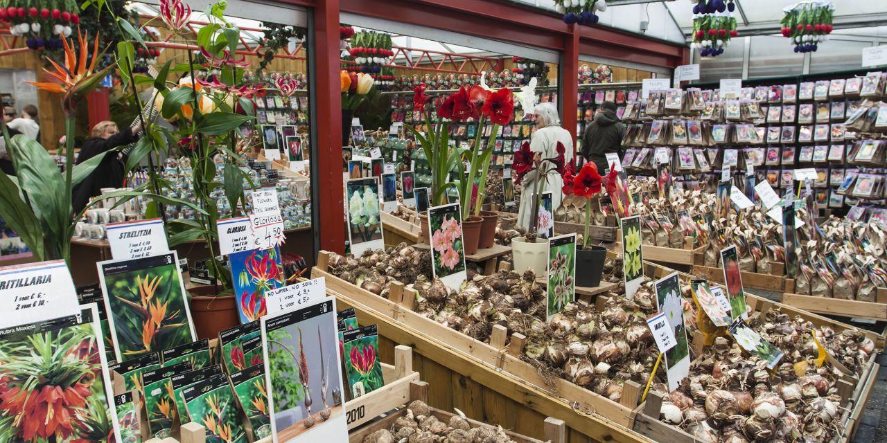 Stand mit Tulpen auf dem De Cuyp-Markt in Amsterdam