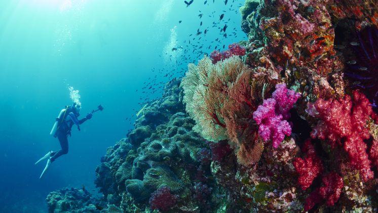 Taucher vor Phuket unter Wasser