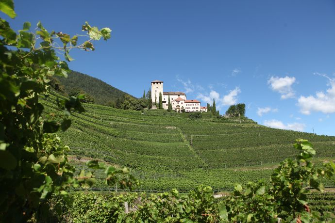Weinstock mit Klosteranlage in Südtirol