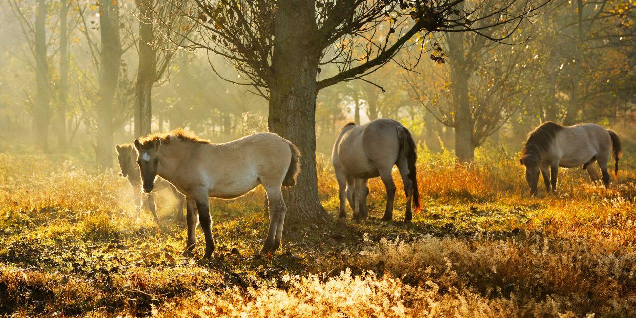 Pferde im Naturpark Barnim