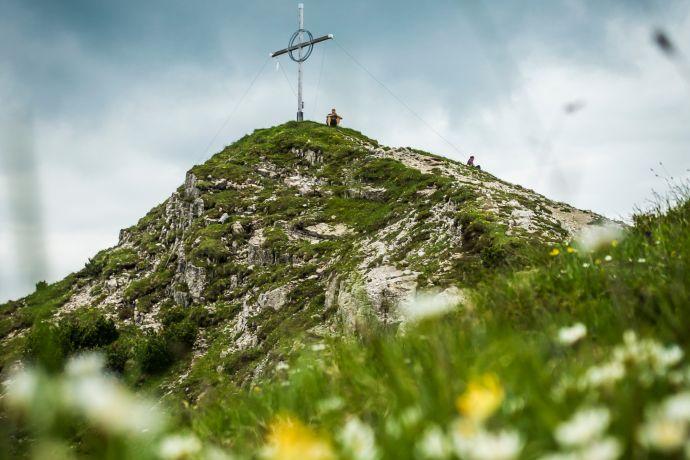 Bergblumen am Bschießer-Gipfel