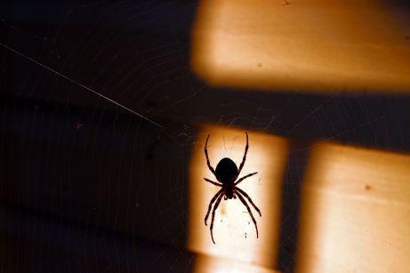 Spinne im Netz © HodahMedia/shutterstock