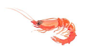 Wasserfarb Zeichnung einer Garnele