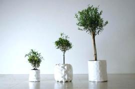 'Growth' by Studio Ayaskan