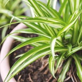5 ต้นไม้ฟอกอากาศ สำหรับบ้านของคุณ