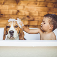 What Makes the Best Family Dog