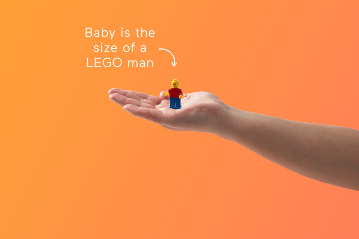 11 Weeks Pregnant - Symptoms, Baby Development, Tips - Babylist