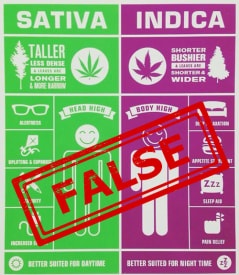 spesies cannabis