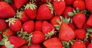 cbd menjaga kualitas buah stroberi