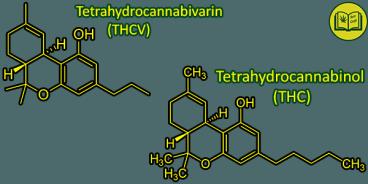 senyawa Tetrahydrocannabivarin (THCV)