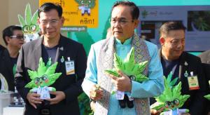 thailand legalisasi ganja