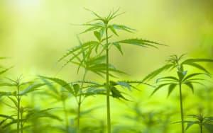 manfaat hemp bagi lingkungan