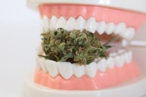 senyawa ganja menghambat bakteri plak gigi