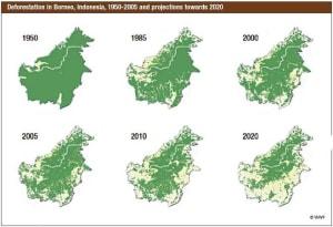 green politic - Kerusakan alam kalimantan