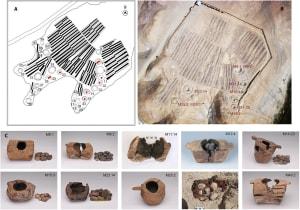 bukti awal manusia menggunakan ganja