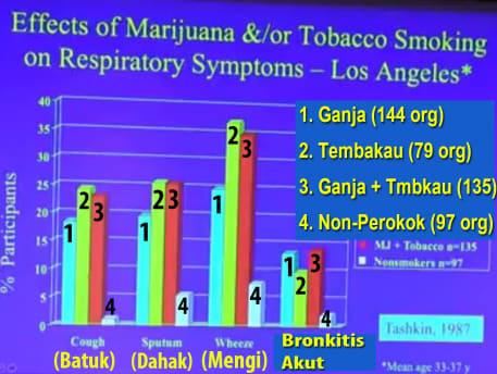 dampak merokok ganja terhadap fungsi paru