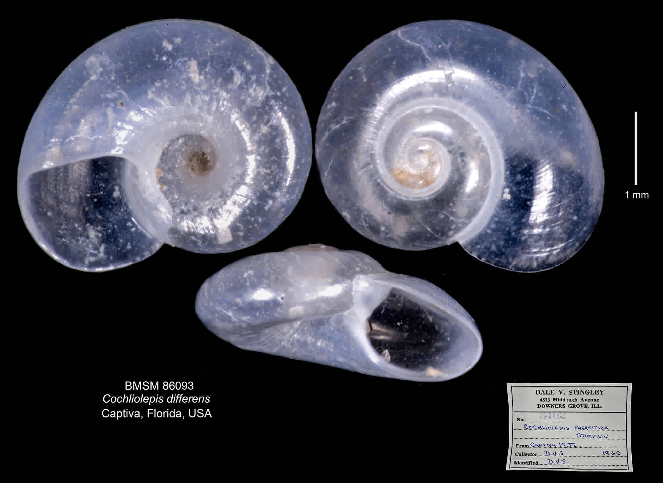 Different Scale Snail