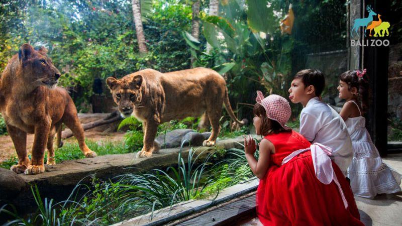 Bali Zoo Explorer
