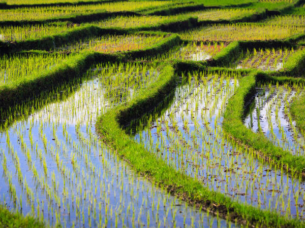 Villa Maridadi - Picturesque rice terraces