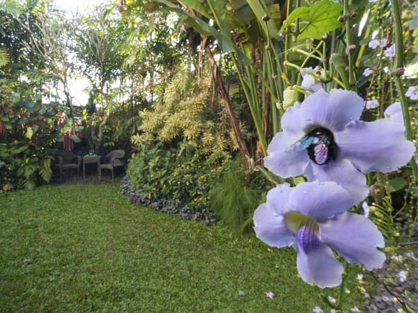 Villa Shinta Dewi Ubud - Glorious garden setting