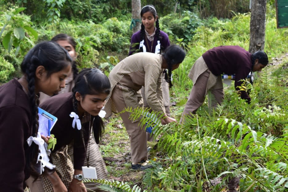 1 day programme on plant identification