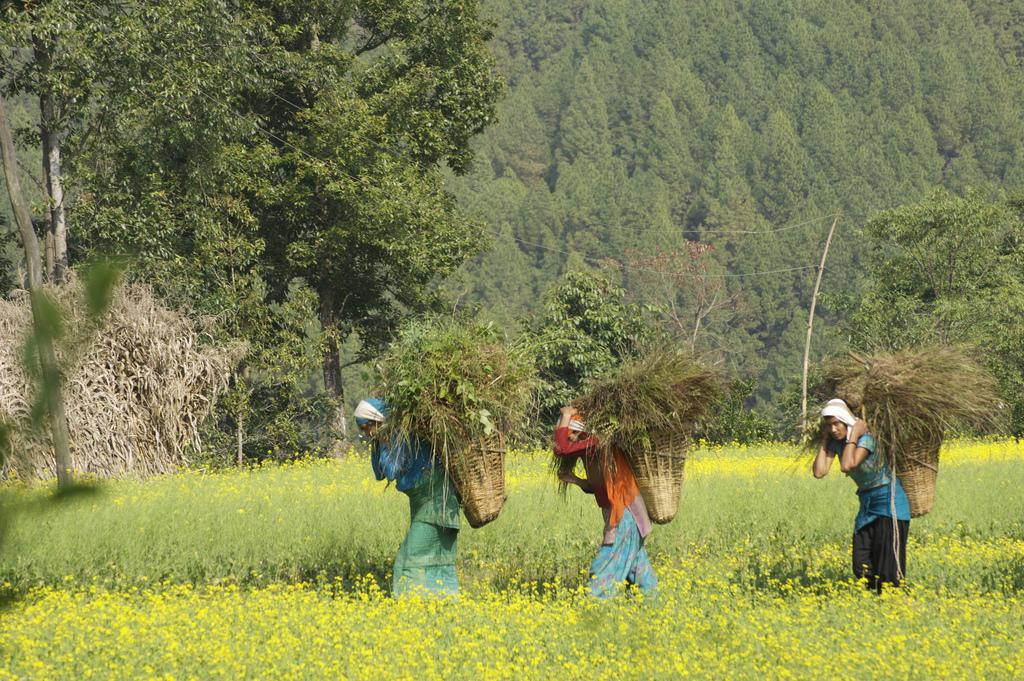 balthali vilaage