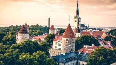 Luftaufnahme: Altstadt Tallinn