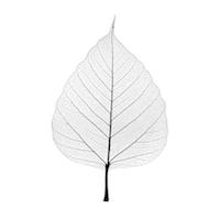 Banbayu Logo Leaf