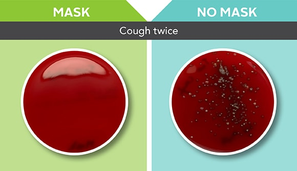 petri dishes show difference between wearing a mask or not wearing a mask