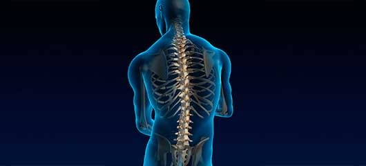 illustration of spine and skeleton in clear body