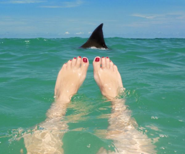 Shark in water