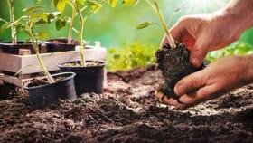 Gartenerden & Rasensamen