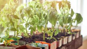 Gartenkalender für April