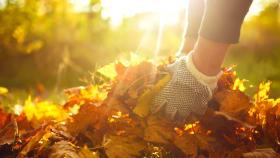 Gartenkalender für November