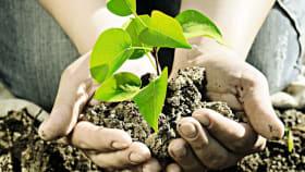 Pflanzenschutz