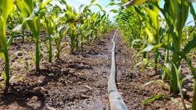 Bewässerung im Gemüseanbau