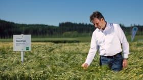 Sortenvorstellung Getreide
