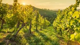 Saatgut zur Weinbergbegrünung