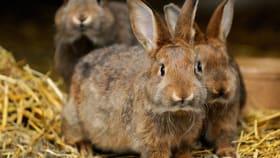 Kaninchenfutter & Nagerfutter