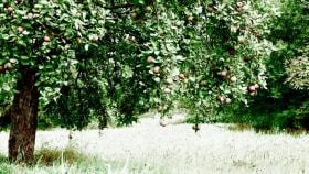 Obstbau