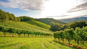 Sonderkulturen: Technik im Obst- & Weinbau