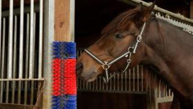 Pferdebürsten