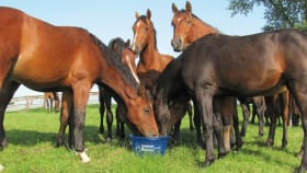 Lecksteine für Pferde