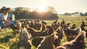 Aktionsartikel im Bereich Tierhaltung